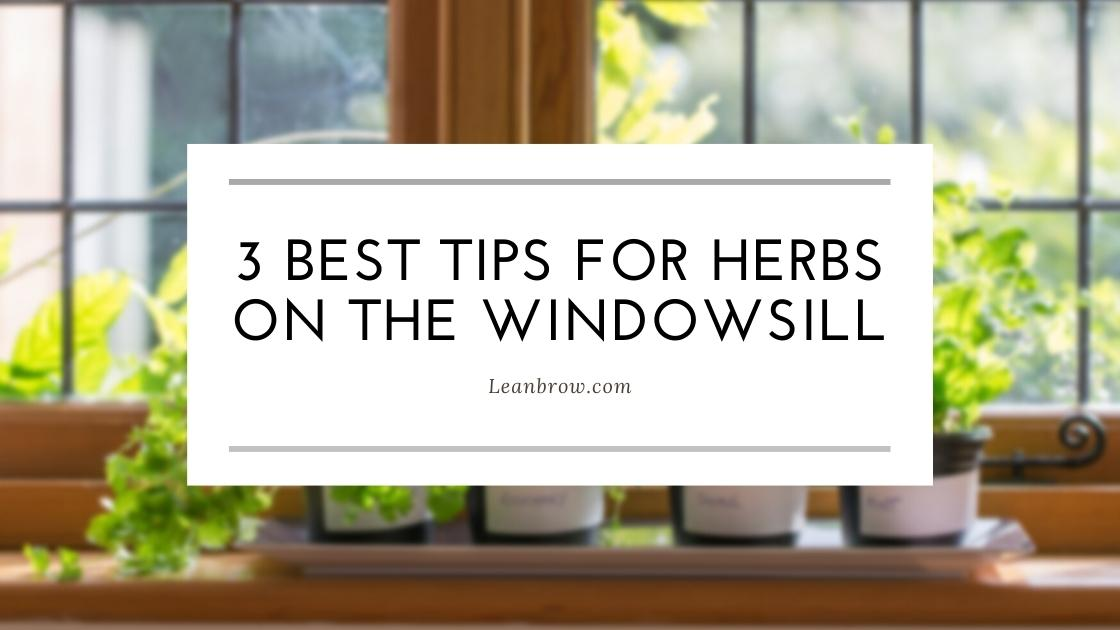 Photo of 3 Best Tips For Herbs On The Windowsill