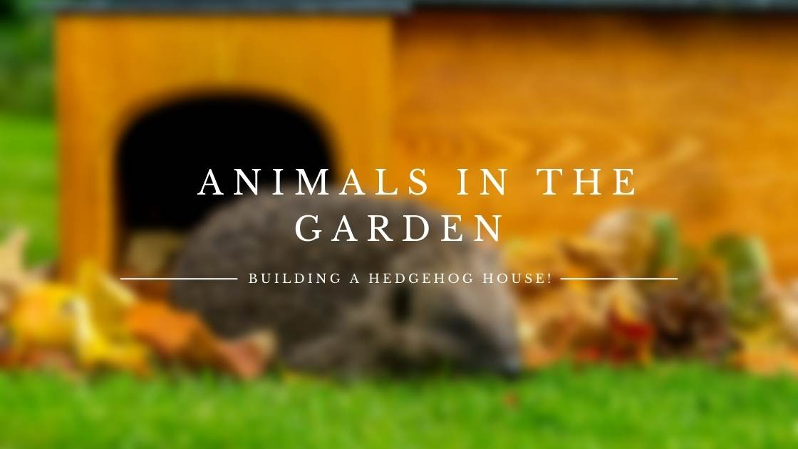 Photo of Animals in the garden: Building a hedgehog house!