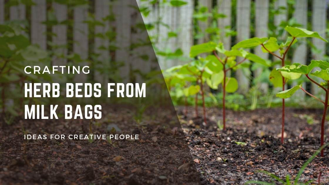 Photo of Crafting herb beds from milk bags