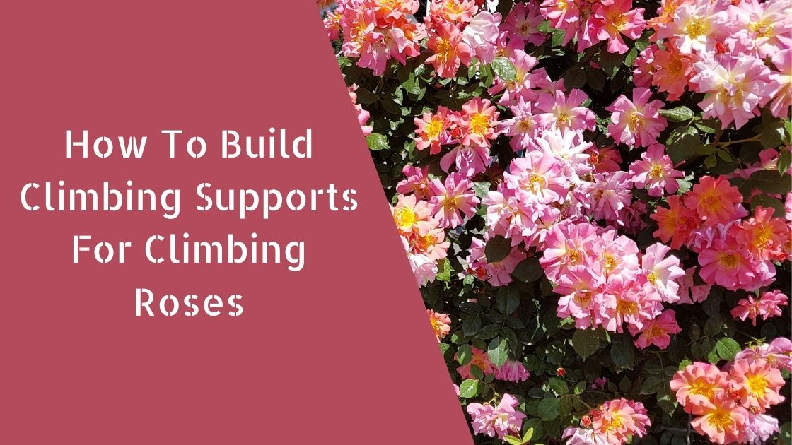 Photo of How To Build Climbing Supports For Climbing Roses