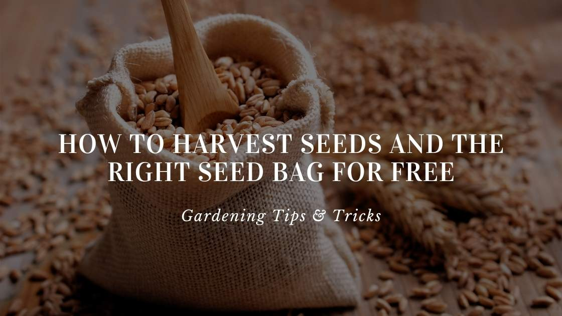 Photo of How to harvest seeds and the right seed bag for free