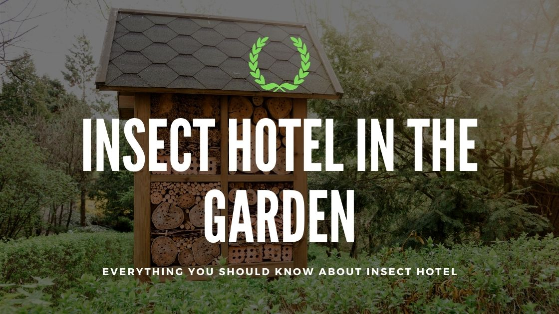 Photo of Insect Hotel in the Garden: Everything You Should Know About Insect Hotel