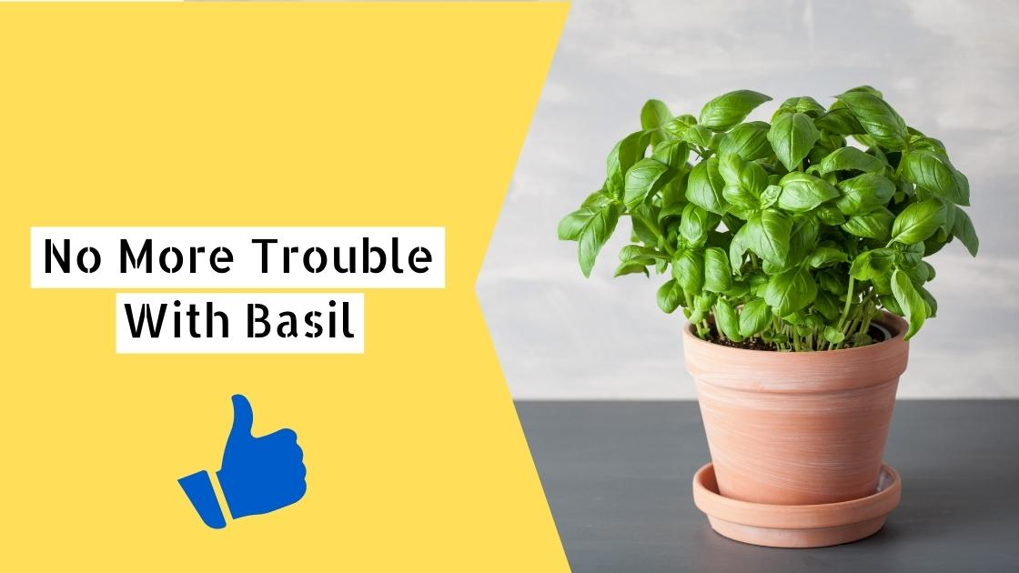 Photo of No More Trouble With Basil – The Proper Way To Care For The Herb