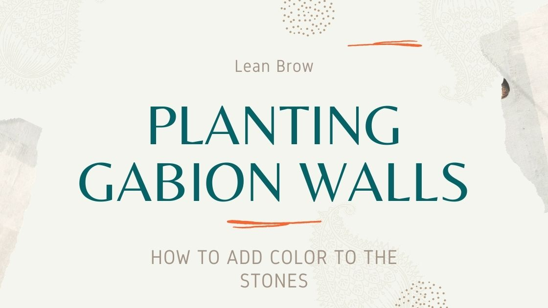 Photo of Planting Gabion Walls – How To Add Color To The Stones