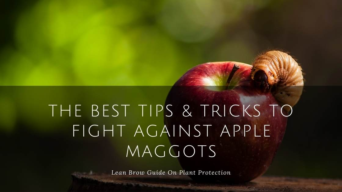 The Best Tips & Tricks to Fight Against Apple Maggots
