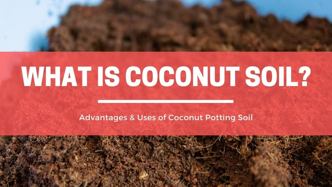 Photo of What is Coconut Soil? Advantages & Uses of Coconut Potting Soil