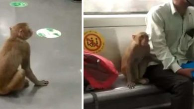 Photo of The monkey took the Delhi metro and got off at the next station;  Video output