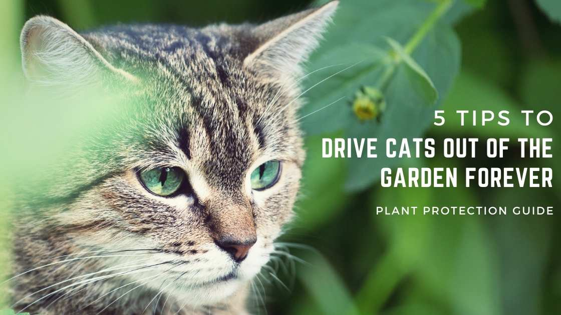 Photo of 5 Tips to Drive Cats Out of The Garden Forever