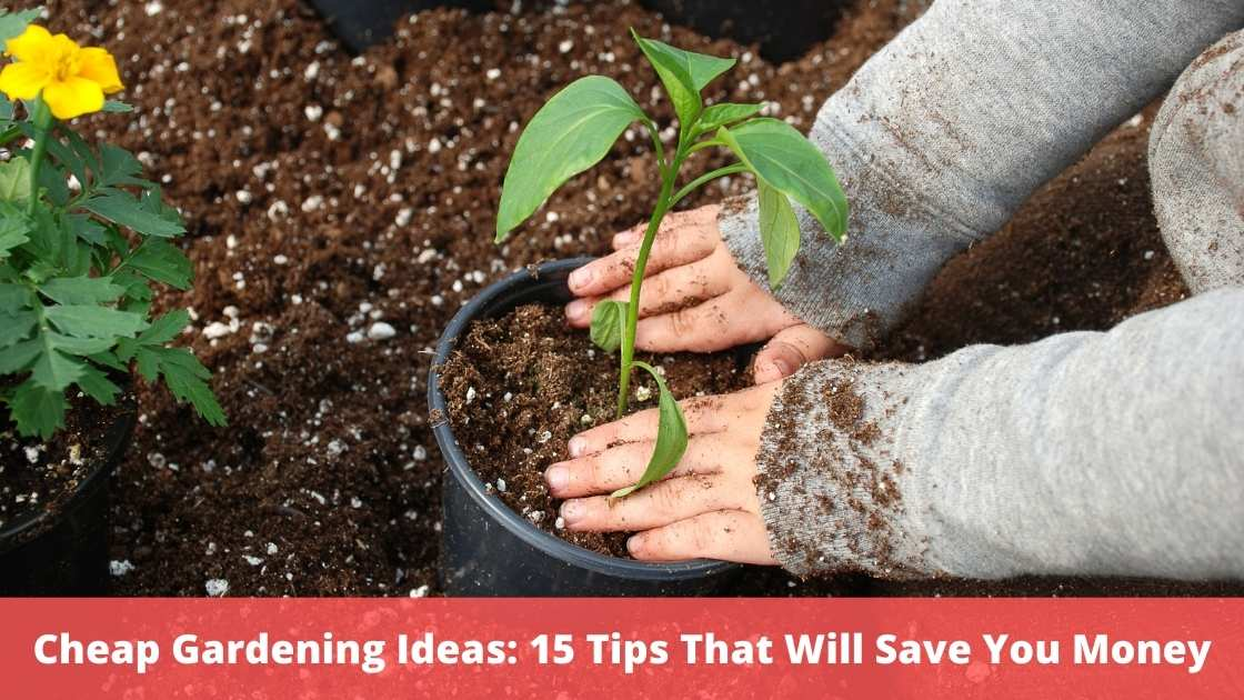 Cheap Gardening Ideas: 15 Tips That Will Save You Money