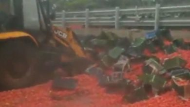 Photo of The truck rolls over on the fast highway;  20 tons of tomatoes fell on the road;  Traffic jam