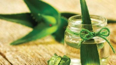 Photo of Aloe vera juice can be drunk on an empty stomach in the morning to reap these benefits!