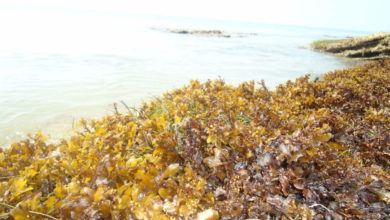 Photo of Seaweed medicine;  Rs 10 lakh and Rs 1.5 crore for a researcher in Grand Kochi