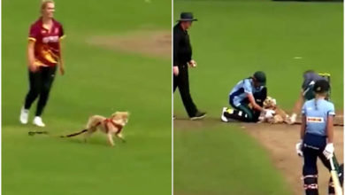 Photo of The dog bites the ball during the cricket start attempt;  Game stopped !!  – Women's cricket match interrupted by dog in Ireland