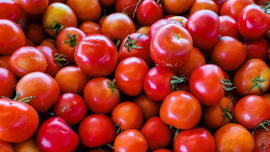 Photo of tomato price rise india: tomato price rises: wholesale price rises from 2.5 rupees to 22 rupees – tomato prices rise in india